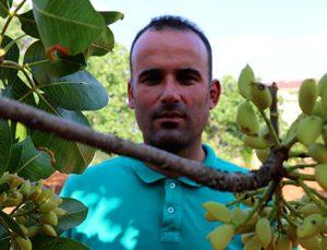 Antep fıstığı üreticisinin Çin sevinci