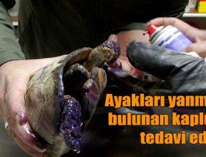 Ayakları yanmış halde bulunan kaplumbağa tedavi edildi