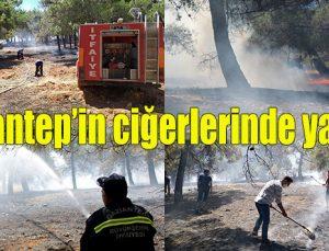 Gaziantep'in ciğerlerinde yangın