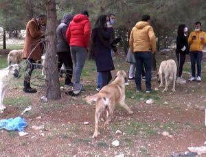 Hayvan severler sokak hayvanlarını kısıtlamada yalnız bırakmadı