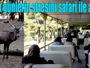 Koronalı günlerin stresini safari ile atıyorlar