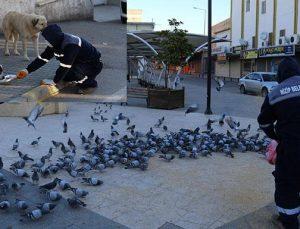 Sokak hayvanları Belediye ekiplerine emanet