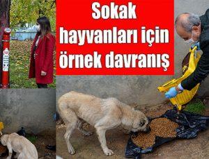 Sokak hayvanları için örnek davranış