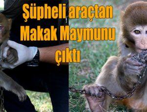 Şüpheli araçtan Makak maymunu çıktı