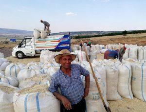 Tahılda hasattan sonra saman telaşı