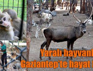 Yaralı hayvanlar Gaziantep'te hayat buluyor